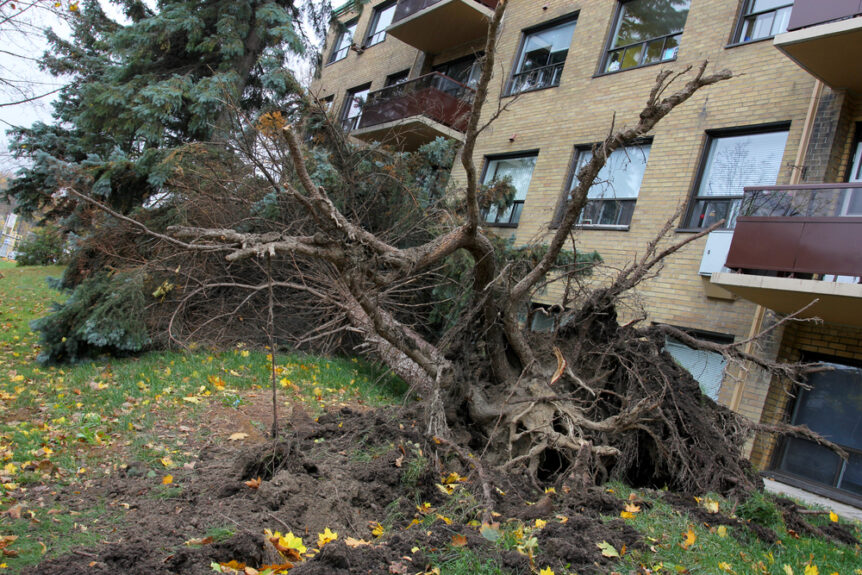 fallen tree on commercial business causing damage after summer storms